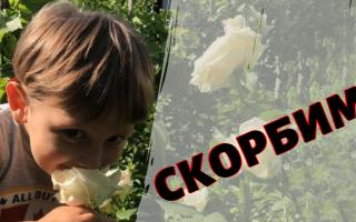 Маленького мальчика — кресника Ирины Билык не стало при покушении на Вячеслава Соболева
